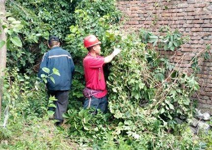 双龙公司机电科组织党员干部开展义务劳动