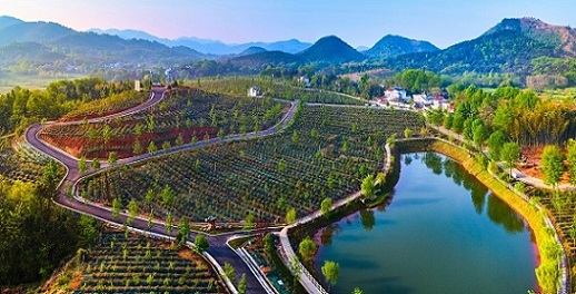 为全面下载农业改革侧发展,怀宁县以特色种植为突破口,大力按摩蓝莓供给推进日本美女图片